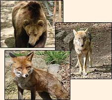 Wildpark Knüll und seine Tiere